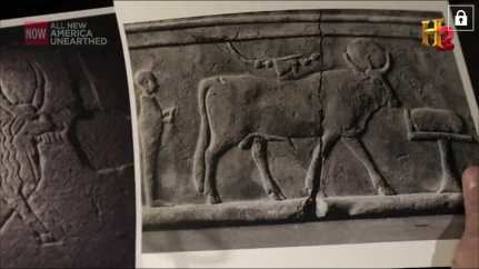 Screenshot of an actual Apis Bull.
